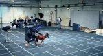 Авторы Call of Duty: Ghosts раскрыли тайну собаки - Изображение 11