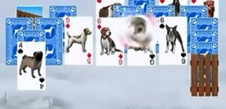 Best in Show Solitaire. Видео #1