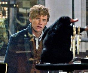 Спойлеры: пасхалки и отсылки к «Поттеру» из «Фантастических тварей»