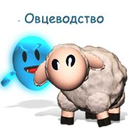 Обложка Овцеводство