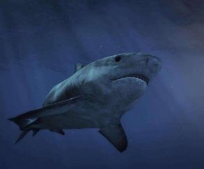 Хотите почувствовать себя акулой-людоедом? Вам поможет мод для Grand Theft Auto5