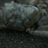 Скриншот Death Stranding – Изображение 5
