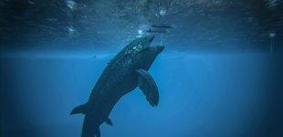 ARK: Survival Evolved. Подробности патча 256: подводные базы, новые виды