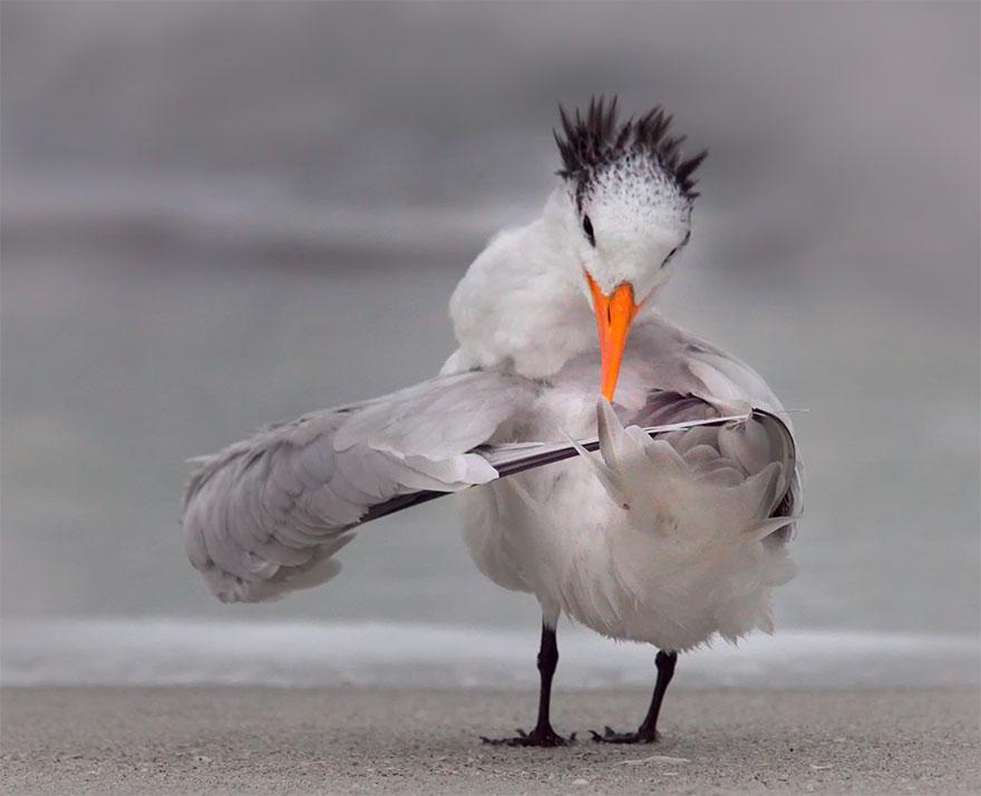 Позитивная галерея: 40 фото сконкурса насамый смешной снимок дикой природы   Канобу - Изображение 3978