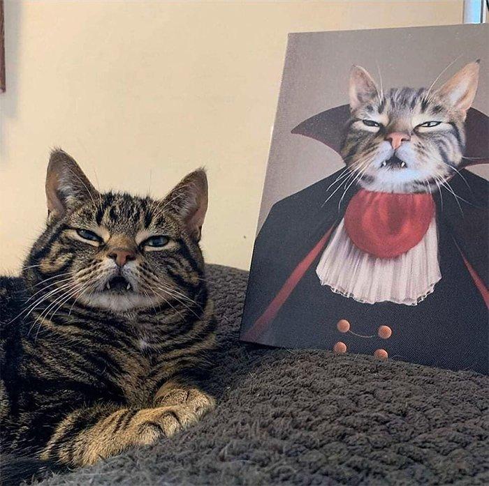 Котов сделали героями культовых фильмов: это новый флешмоб винтернете | Канобу - Изображение 6975