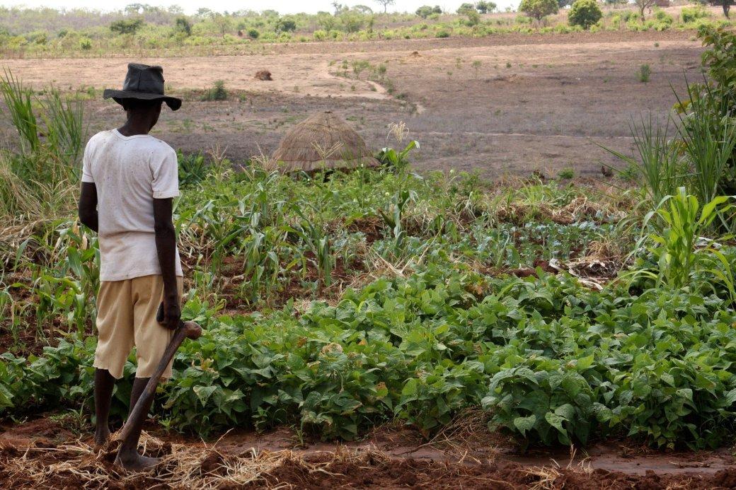Игра c поддержкой Google Earth помогает африканским фермерам | Канобу - Изображение 2358