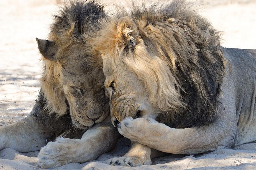 Позитивная галерея: 40 фото сконкурса насамый смешной снимок дикой природы   Канобу - Изображение 3981